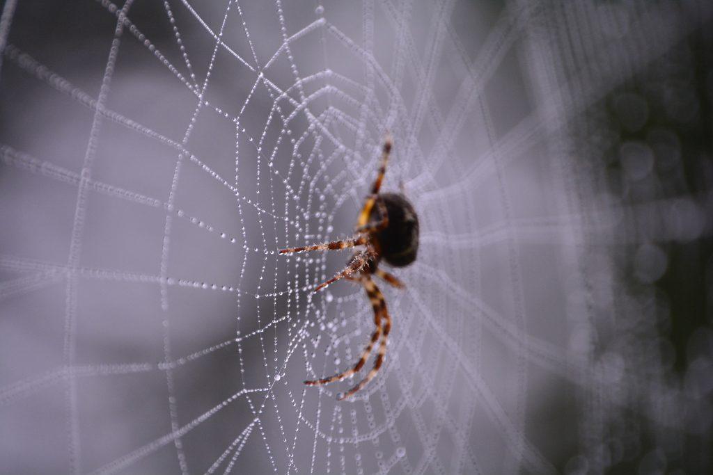 Blogs schrijven is als het spinnen van een web